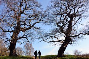 Trees, Richmond