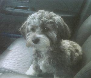 Chen, dog