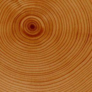 apple tree rings-bret jordan
