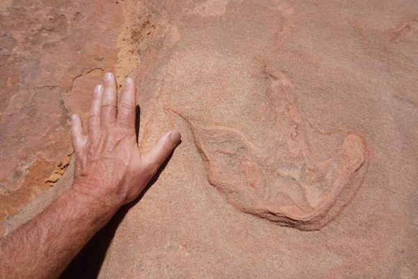 Figure 10. Dinosaur print in a trackbed (Moccasin Mountain Tracksite, UT).