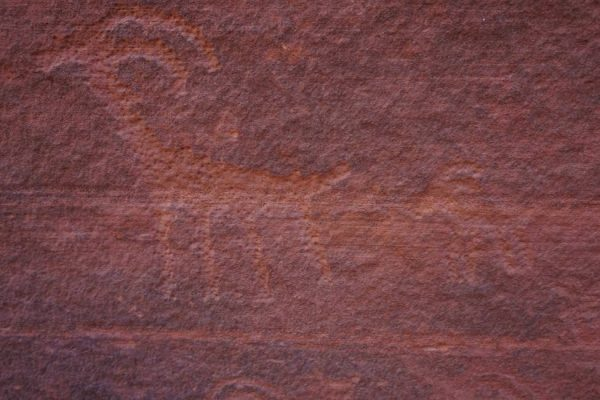 Figure 14. Bighorn sheep petroglyph at the base of a Navajo Sandstone slot canyon wall (Buckskin Gulch, UT).