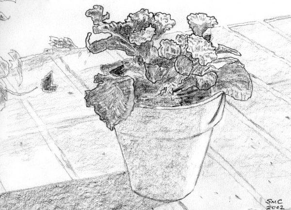 Chen, flowerpot